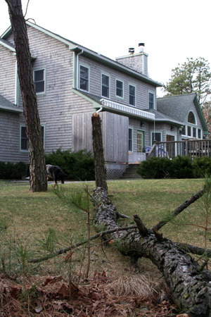 hamptons storm knocks down trees real estate for sale